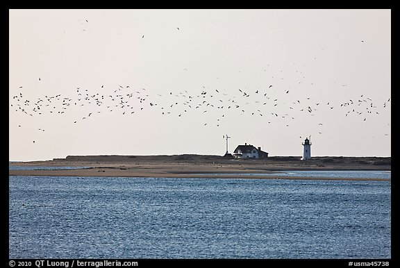 Flock of birds and Race Point Light, Cape Cod National Seashore. Cape Cod, Massachussets, USA (color)