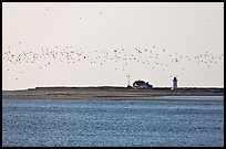 Flock of birds and Race Point Light, Cape Cod National Seashore. Cape Cod, Massachussets, USA ( color)