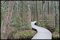 Boardwalk through swamp, Cape Cod National Seashore. Cape Cod, Massachussets, USA (color)