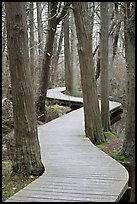 Elevated boardwark through flooded forest , Cape Cod National Seashore. Cape Cod, Massachussets, USA (color)
