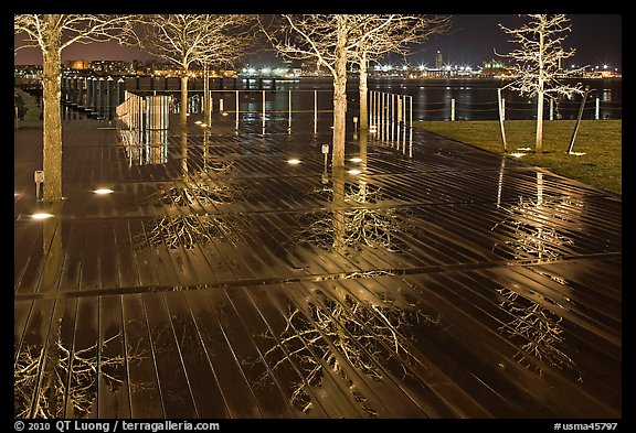 Tree reflections on wet boardwalk. Boston, Massachussets, USA (color)