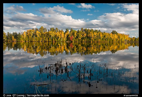 Reeds and autumn trees reflected in still pond, Greenville Junction. Maine, USA (color)