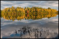 Reeds and trees in fall color reflected in mirror-like water, Greenville Junction. Maine, USA