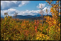Autumn landscape with colorful leaves and distant mountains. Maine, USA ( color)