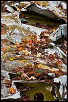 Fall leaves on wreck of crashed B-52. Maine, USA
