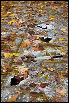 Close-up of aicraft wreck with fallen leaves. Maine, USA