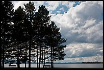 Conifers silhouette and clouds, Lily Bay State Park. Maine, USA ( color)