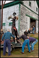 Hunters lifting dead moose for weighting, Kokadjo. Maine, USA (color)