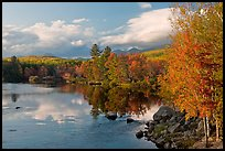 Trees in fall foliage reflected in wide  Penobscot River. Maine, USA (color)