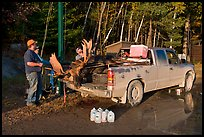 Hunters with moose in back of truck. Maine, USA (color)