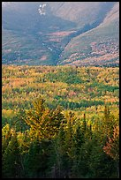 Forested slopes of Mount Katahdin. Baxter State Park, Maine, USA ( color)