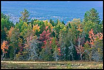 Trees in fall foliage and Katahdin slopes. Maine, USA