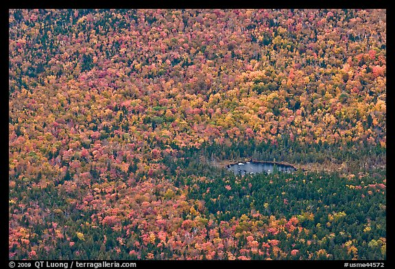 Aerial view of pond and trees in fall foliage. Baxter State Park, Maine, USA (color)