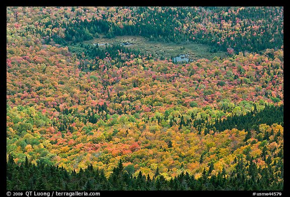 Mixed forest, meadow and pond seen from above. Baxter State Park, Maine, USA (color)