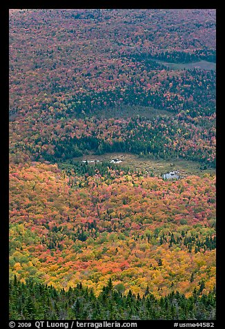 Forest and meadows from above. Baxter State Park, Maine, USA (color)
