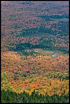 Forest and meadows from above. Baxter State Park, Maine, USA