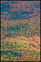 Tapestry of colors in autumn. Baxter State Park, Maine, USA ( color)