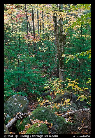 Forest with boulders, evergreen, and trees in autumn color. Baxter State Park, Maine, USA (color)