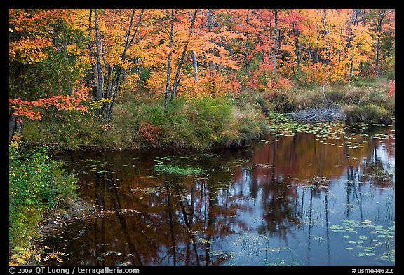 Pond surrounded by trees in fall colors. Maine, USA (color)