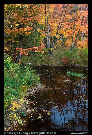 Trees in fall foliage next to pond. Maine, USA (color)