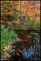Trees in fall foliage next to pond. Maine, USA ( color)