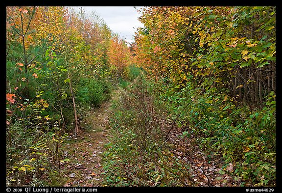 Overgrown road. Allagash Wilderness Waterway, Maine, USA (color)