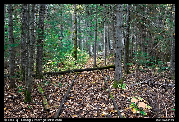 Abandonned railroad tracks in forest. Allagash Wilderness Waterway, Maine, USA (color)