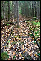 Abandonned railway tracks. Allagash Wilderness Waterway, Maine, USA ( color)