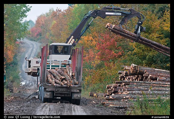 Log loader lifts trunks into log truck. Maine, USA (color)