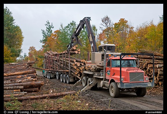 Logging operation loading tree trunks onto truck. Maine, USA (color)