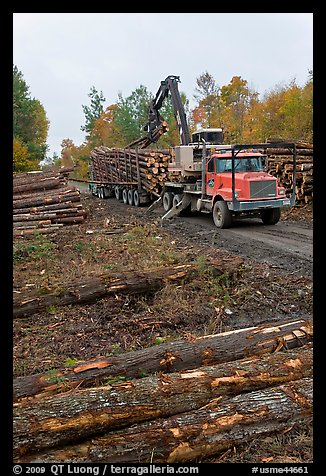 Forestry site with working log truck and log loader. Maine, USA (color)