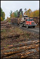 Forestry site with working log truck and log loader. Maine, USA