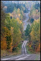 Meandering forestry road in autumn. Maine, USA ( color)