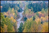 Northern forest in fall with narrow unimproved road. Maine, USA
