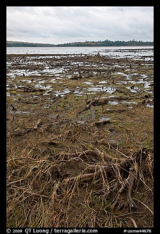 Dead trees and grasses on shores of Round Pond. Allagash Wilderness Waterway, Maine, USA (color)