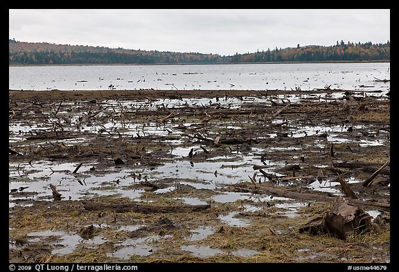 Dead trees and stumps, Round Pond. Allagash Wilderness Waterway, Maine, USA (color)