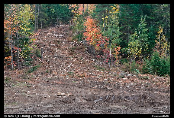 Clear cut gully in forest. Maine, USA (color)