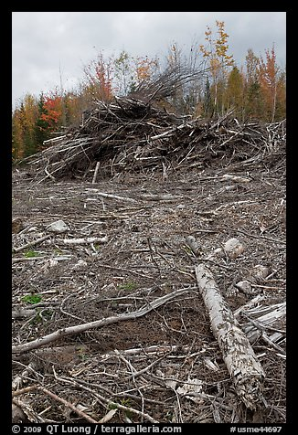 Cut area and twigs in logging area. Maine, USA (color)