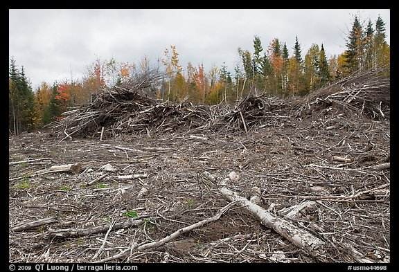 Deforested landscape in the fall. Maine, USA