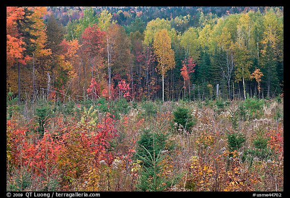 Clearing and north woods in the fall. Maine, USA (color)