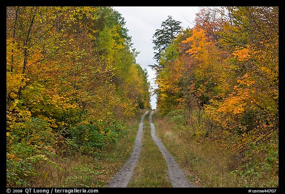 Grassy road in autumn. Maine, USA (color)
