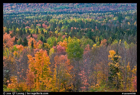 Septentrional woods in autumn. Maine, USA (color)