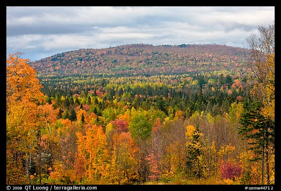 Northern forest landscape in autumn. Maine, USA