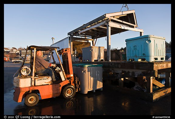 Man loading lobster crates in harbor. Stonington, Maine, USA (color)