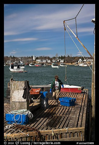 Man preparing to lift box from deck. Corea, Maine, USA (color)