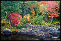 Rocks and trees in fall foliage, along East Branch Penobscot River. Katahdin Woods and Waters National Monument, Maine, USA ( color)