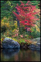 Rocks and trees in fall foliage reflected in East Branch Penobscot River. Katahdin Woods and Waters National Monument, Maine, USA ( color)