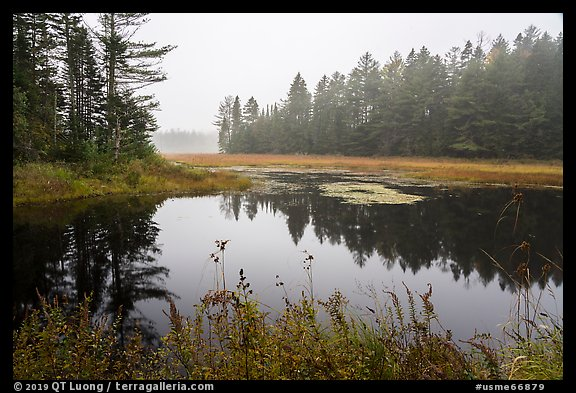Pond in fog, Sandbank Stream. Katahdin Woods and Waters National Monument, Maine, USA (color)