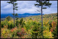 Transitional deciduous northern hardwood forest and struce fir mix. Katahdin Woods and Waters National Monument, Maine, USA ( color)