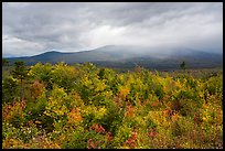 Northern hardwood forest in autumn foliage and cloud-capped Katahdin. Katahdin Woods and Waters National Monument, Maine, USA ( color)